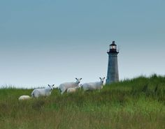 The Cape Sable Lighthouse - Nova Scotia's tallest lighthouse. Currently fundraising efforts are being put in place to help save and restore this valuable landmark and asset. Lighthouse Trails, Island Pictures, Lost Art, Covered Bridges, Nova Scotia, Windmill, Cape, To Go, Lighthouses