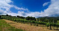 La Casa dei Cini nasce come azienda agricola nel 2005 grazie all'entusiasmo di Clelia e Riccardo Cini, entrambi laureati presso la Facoltà di Agraria, rispettivamente in Scienze Agrarie ed Ambientali e in Viticoltura ed Enologia. La prima operazione è stata individuare i prodotti di punta, compito facile dato che, il vino, di nostro nonno Bonaventura e nostro padre Aristide, è sempre risultato buono, mentre gli oliveti crescevano in eta e qualità. Abbiamo modernizzato gli impianti coltivando