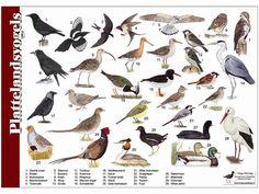 per 5 Bird Illustration, Illustrations, Animal Plates, Aquatic Birds, Bird Crafts, Backyard Birds, Fauna, Bird Watching, Bird Feathers