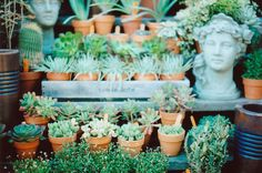 i want a succulent shop. by abbytrysagain on flickr