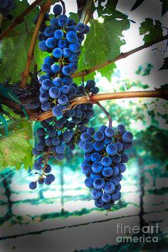✯ Cabernet Sauvignon Grapes