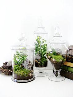 Mini secret gardens in glass jars. Would look great in a Kilner.