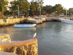 Not onlytouristscome to see the beautifulsunsetinBayahibe Dominican republic
