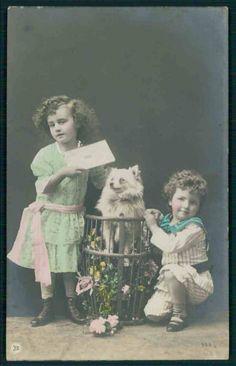 Child children Pomeranian Spitz Dog in a basket original 1910s photo postcard picclick.com