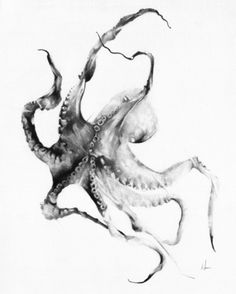 """Octopus"" Art Print by Alexis Marcou on Society6."