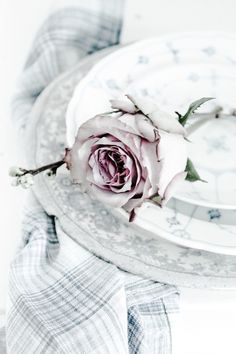 SEPTEMBER 3-2015 ~ Dreaming of Faded Rose • By • E •  •