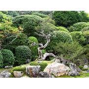 Niwaki. Japanese Garden. Ogród japoński.
