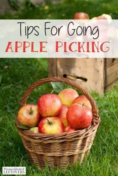 Tips for going apple picking - a frugal and fun activity for the whole family. #fall #fallactivity #apples #applepicking