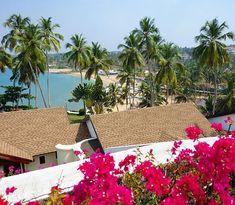 Ein traumhafter Ausblick #taipantouristik #indien #kovalam #strandurlaub #kerala #immereinereisewert #wanderlust #reiseblogger #sonne #wärme #blüten #meer Goa, Kovalam, Wanderlust, Plants, Indian, Sun, Plant, Orphan, Planets