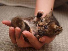 Eine Handvoll Katze: Zehn zuckersüße Kitten - Seite 3