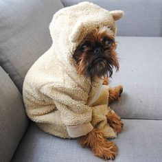 Sad Brussels Griffon Just Wants Bacon - A Place to Love Dogs Cute Puppies, Cute Dogs, Dogs And Puppies, Doggies, Animals And Pets, Funny Animals, Cute Animals, Baby Animals, I Love Dogs