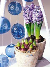 Comment cultiver et faire fleurir plus tôt des bulbes pour Noël : floraison anticipée grâce au forcage
