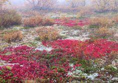 Autumn foliage Autumn, Colors, Plants, Painting, Art, Art Background, Fall Season, Painting Art, Kunst