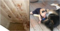 Loyal German shepherd 'teaches' the would-be thief a serious lesson while saving the owner's property | house | blood | family | NTD Inspired