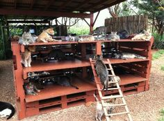 Pet DIY Shelter House Cat Pallets. This is just the inspiration I need to officially become a crazy cat lady!!!!