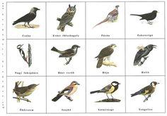 Nyakunkon a madáretetés kezdete. Erre készülődve merült fel, hogy átismételjük, melyek azok a madarak, akik velünk vannaktélen-nyáron. :) ...