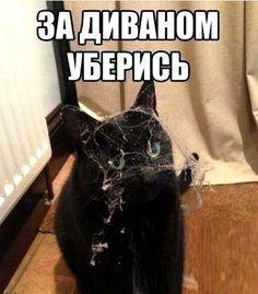 За диваном уберись  #дом #кот #коты #уборка #прикол