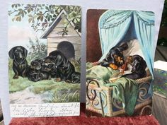 US $10.00 Used in Collectibles, Postcards, Animals