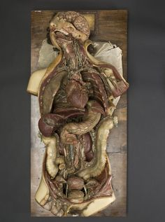 Wax Anatomical Model of a Female Showing Internal Organs. Francesco Calenzuoli, Florence, 1818; Wellcome Collection at the Science Museum