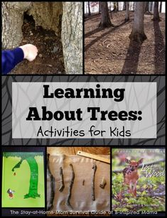 An entire morning of simple activities for learning about trees for toddlers and preschoolers. We spent the morning reading, exploring, measuring, and talking about trees. Post contributed by Jaimi of The Stay-at-Home-Mom Survival Guide over at B-Inspired Mama.