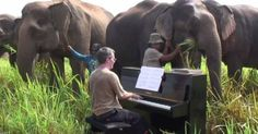 To Help Elderly Elephants, This Man Decided to Something That's Pretty Hard to Believe.