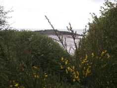 Views of Rough Island in Rough Firth, Galloway
