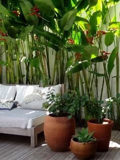 Patio Tropical, Tropical Pool Landscaping, Tropical Garden Design, Tropical Plants, Landscaping Ideas, Garden Landscaping, Privacy Landscaping, Tropical Style, Exotic Plants