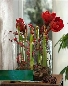 Hippeastrum - Amaryllis and pine cones Christmas Flower Arrangements, Christmas Flowers, Floral Arrangements, Christmas Decorations, Rustic Christmas, Winter Christmas, Christmas Home, Xmas, Deco Floral