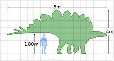 File:Stegosaurus size.svg