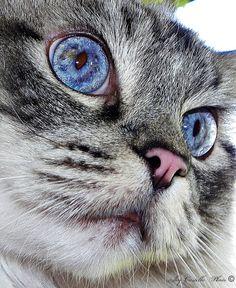 what beautiful eyes