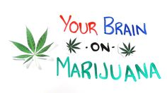 Your Brain on Drugs: Marijuana Great for a lesson on the effects of drugs
