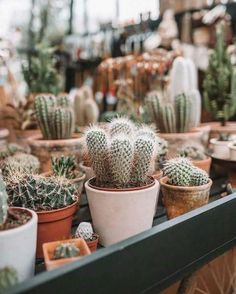 We all love succulents and cactus but do you know the difference between them? Click the post to learn on our website! Cacti And Succulents, Planting Succulents, Planting Flowers, Cactus Plante, Pot Plante, Cactus Pot, Cactus Flower, Art Floral Japonais, Decoration Plante