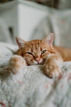 Lazy Cat, Closed Eyes, Like A Cat, Cats, Stock Photos, Gatos, Cat, Kitty, Kitty Cats
