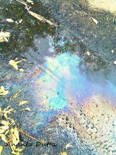 gasoline rainbows on puddles :)