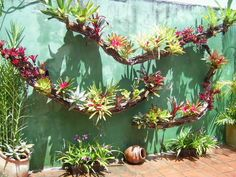 Assembly and decoration with bromeliads - Forum InfoJardín Orchids Garden, Succulents Garden, Tropical Garden, Tropical Plants, Garden Art, Garden Design, Garden Sheds, Vertical Succulent Gardens, Air Plants