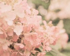Dreamy pink hydrangeas.. How could I resist?