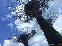 Iconic Super Trees at Gardens by the Bay - www.shenannagans.com