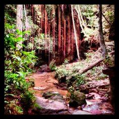 O Cânion do Sussuapara, localizado no Jalapão, próximo ao município de Mateiros (TO), é o lugar ideal pra ecoturismo. Os raios do sol passando por entre as arvores, raízes e samambaias dão um toque multicolorido nas paredes e águas da gruta. Vale a pena conhecer! Foto: @mochileirodasmaravilhas