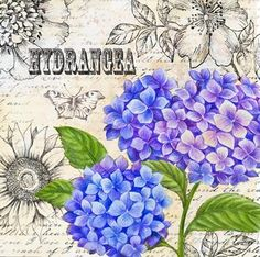 Hydrangea on collage