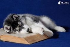 Good luck with finals!! Be sure to get rest in between studying this weekend! #Northeastern #Huskies http://t.co/uKq66QHZxs