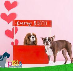 Feliz día del amor y la amistad 😘  #PetsWorldMagazine #RevistaDeMascotas #Panama #Mascotas #MascotasPanama #MascotasPty #PetsMagazine #MascotasAdorables #Perros #PerrosPty #PerrosPanama #Pets #PetsLovers #Dogs #DogLovers #DogOfTheDay #PicOfTheDay #Cute #SuperTiernos