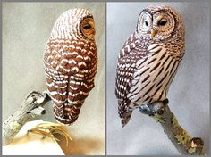 Barred Owl Tupelo wood carving - Artwork by Tim McEachern.