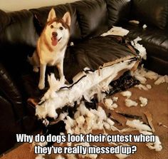 Funny Animal Pictures Of The Day - 25 Pics So you simply can't/won't KILL them on the spot!!! #funnydogmeme #dogsfunnypuppies