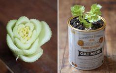 Hergroeibare groenten, stap op weg naar zelfvoorzienend leven? | Duurzaam thuis