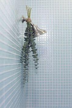 Eucalyptus on shower