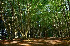 Sentiero nel bosco   Poggio San Romualdo