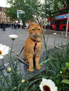 Out and around London town.. from FB page James Bowen & Street Cat Bob