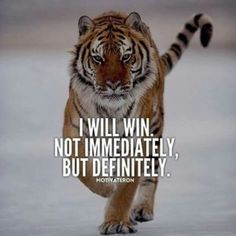Inspirational And Motivational Quotes : 29 of the Best Quotes on Success and Life. - Hall Of Quotes Tiger Quotes, Lion Quotes, The Words, Positive Quotes, Motivational Quotes, Inspirational Quotes, Strong Quotes, Positive Vibes, Wisdom Quotes