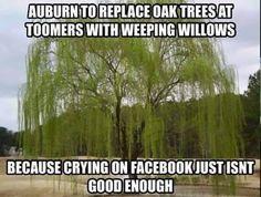 College Football Memes, Weeping Willow, University Of Alabama, Alabama Football, Oak Tree, Roll Tide, Not Good Enough, Crimson Tide, Herbs