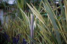 Lampade da Esterno da Giardino a Luce Led con diffusione simmetrica per arredi floreali